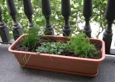 Aprenda a cosechar sus propios condimentos y verduras con esta