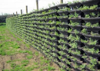 Emprendimiento viveros chile proyectos verdes para la for Vivero de cactus en chile