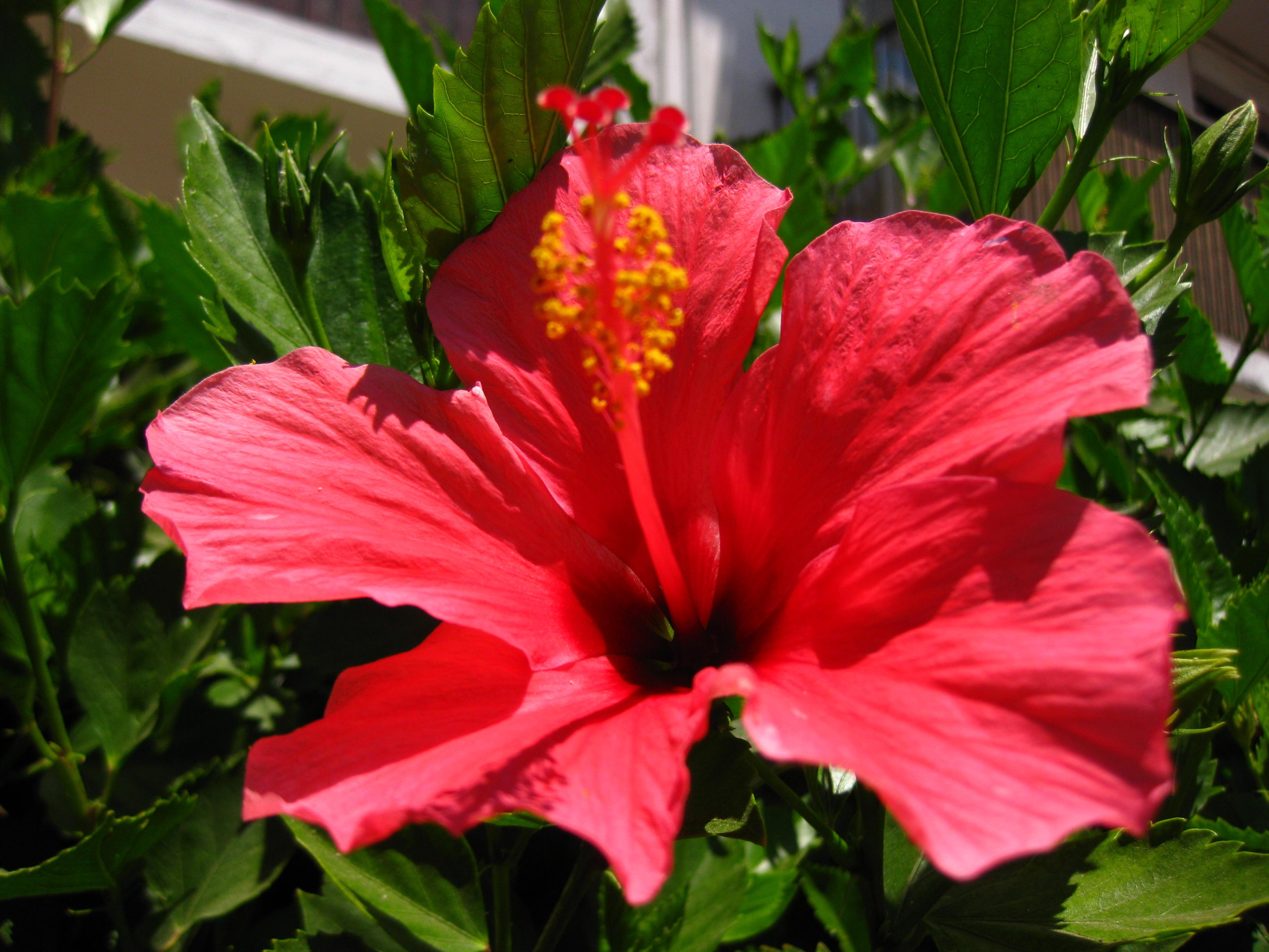 Flores de arica el noticias de arica y parinacota - Todo tipo de plantas con sus nombres ...